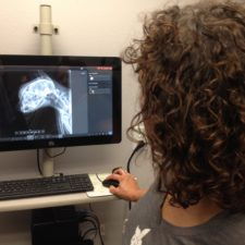 Veterinarian Danielle Johnson works with a digital radiograph of a cat at Homestead Veterinary Clinic in Baldwin, Wisconsin