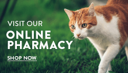 Online pet pharmacy at Homestead Veterinary Clinic in Baldwin, Wisconsin